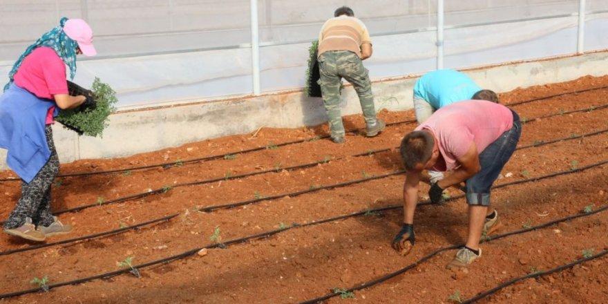 Ülke tarımına önemli katkı