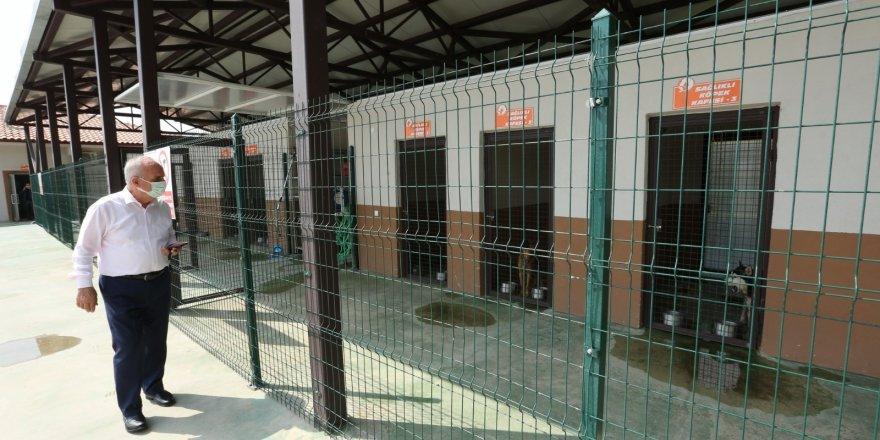 Sokak hayvanları rehabilitasyon merkezi örnek oluyor