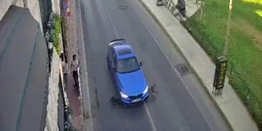 Bakırköy'de yolun karşısına geçmeye çalışan köpeklere otomobil böyle çarptı